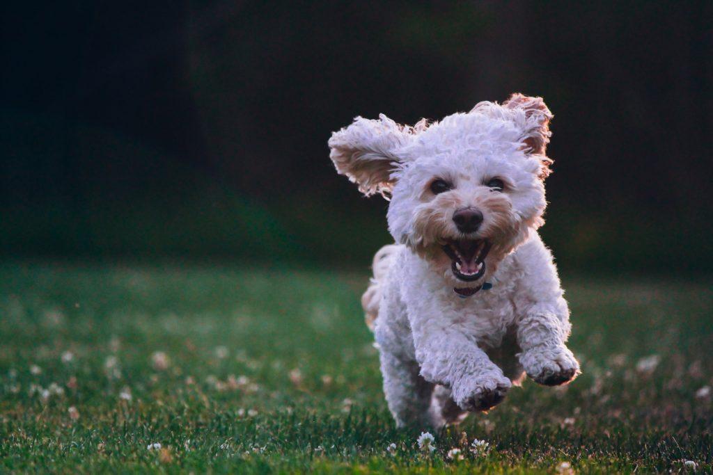stopppen met instagram blije hond