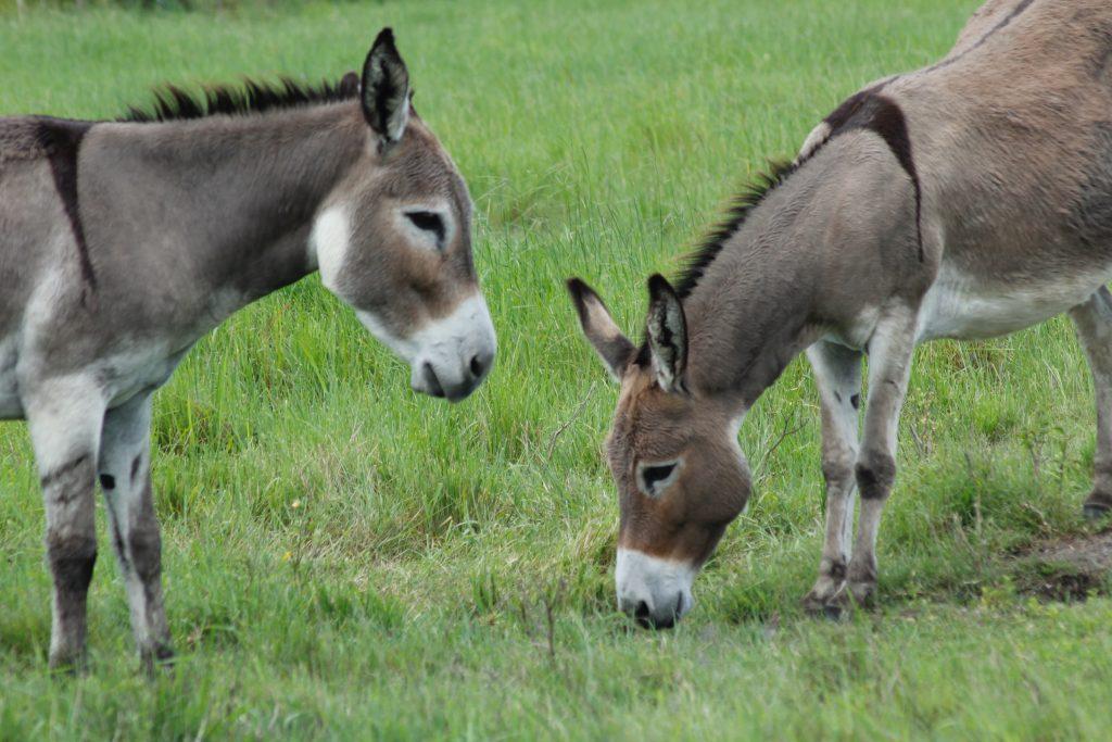 Woordjes leren middelbare school tips frans duits ezelsbruggejte