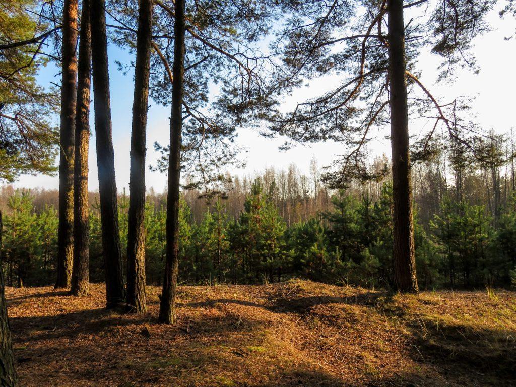 tips tegen verveling corona naar buiten bos