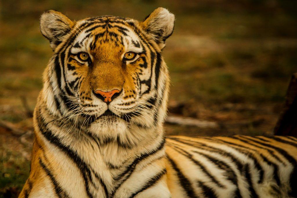 chagrijnig tips goed humeur verbeteren je woede uiten tijger
